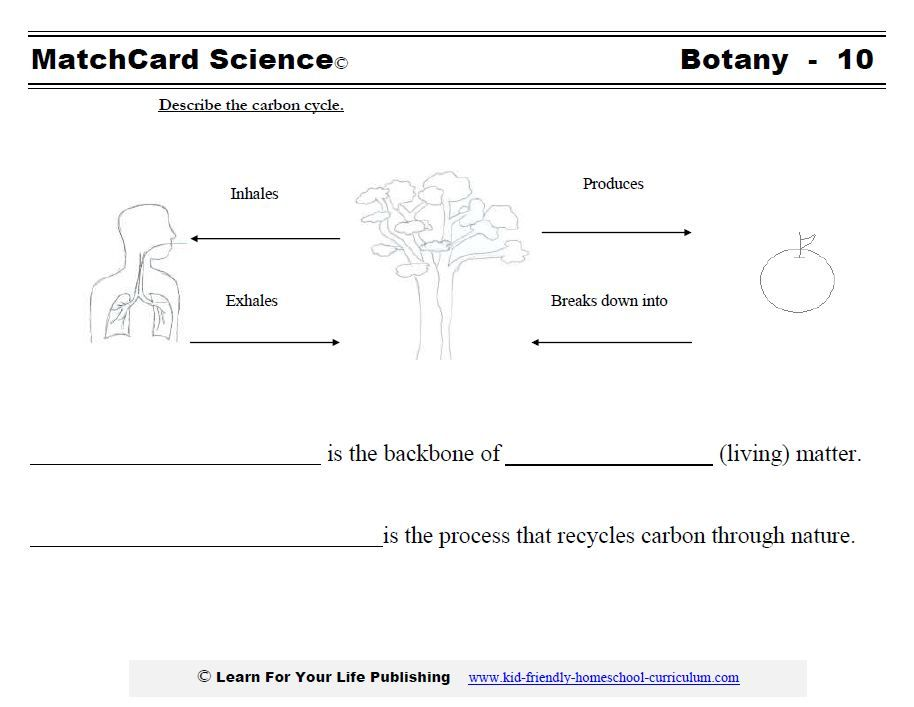 Carbon Cycle | Homeschool - Science | Pinterest | Photosynthesis ...