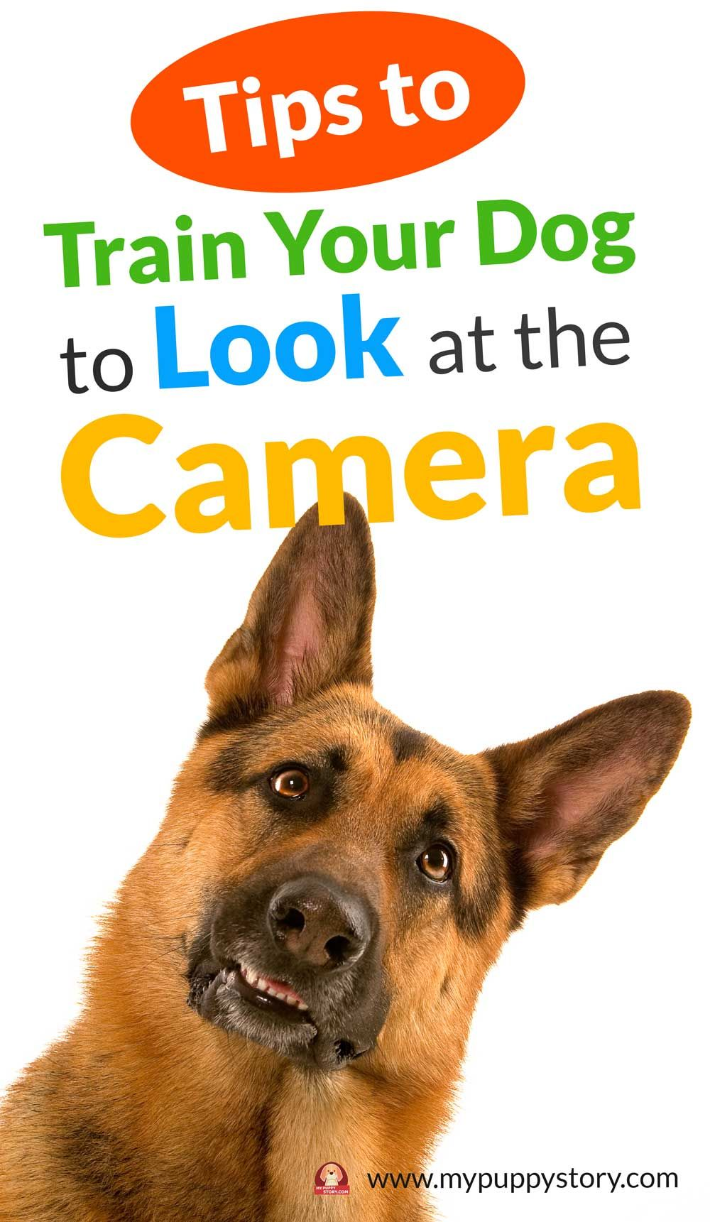 How to Train Your Dog to Look at the Camera Training