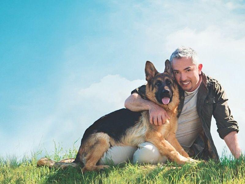 Buy German Shepherd Puppies For Sale In Sweden