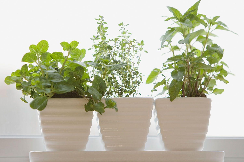 Start your own windowsill herb garden Best herbs to grow