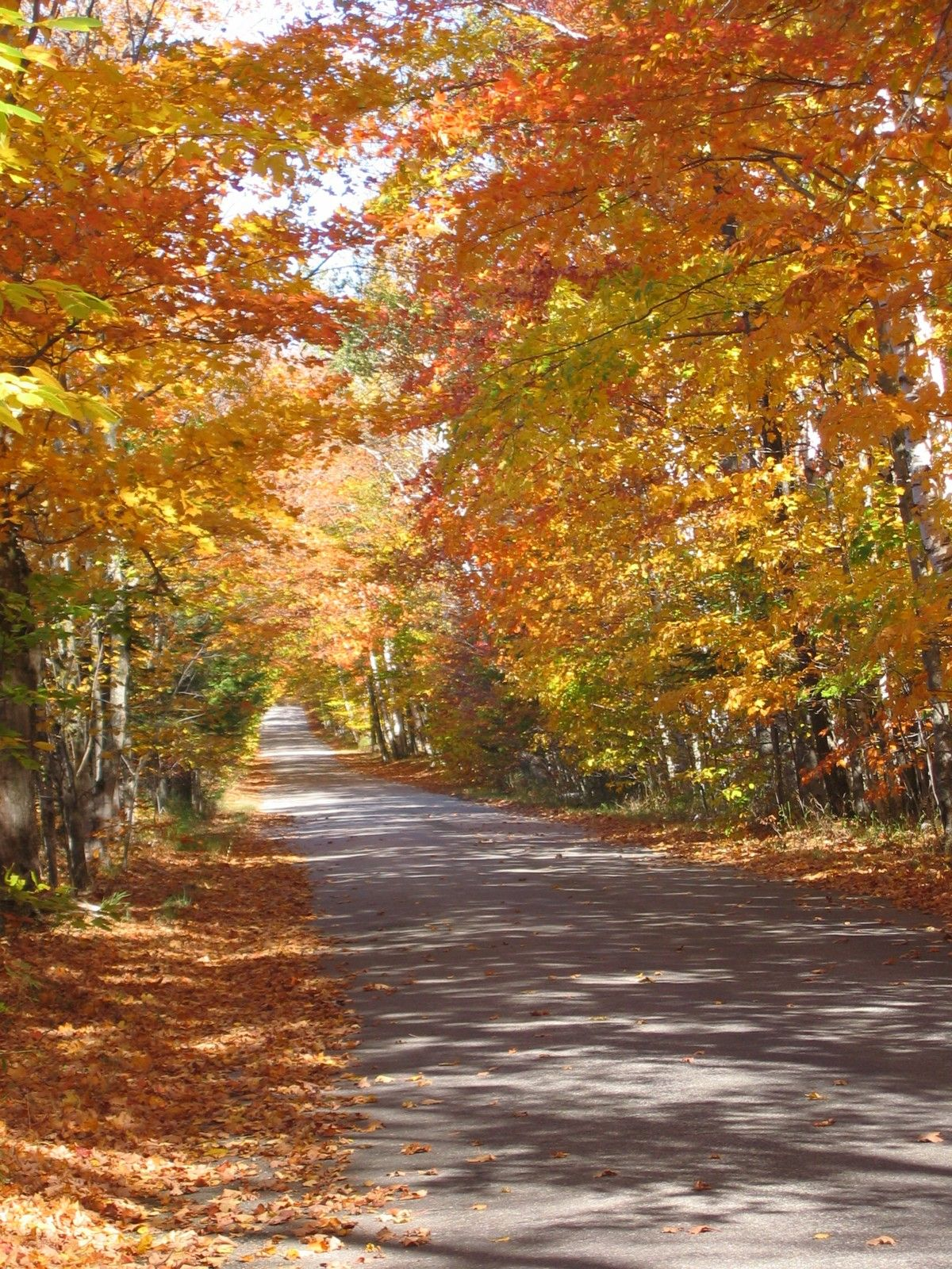 A Typical Fall Roadside On Washington Island Wi Washington Island Door County Wisconsin Places To Visit