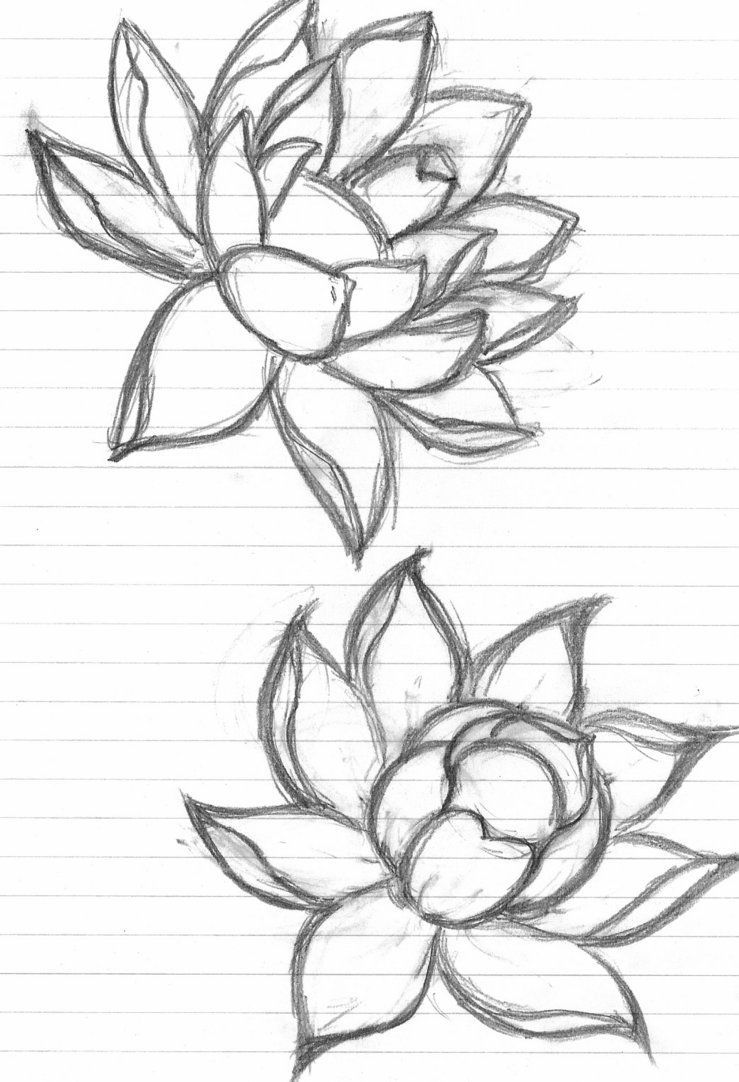 50+ Draw Flowers for Beginners Step by Step 2020