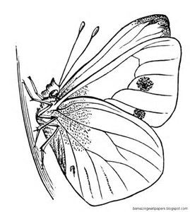 butterfly chrysalis coloring pages - photo#22