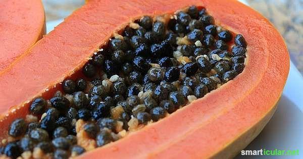 papayakerne nicht wegwerfen ein schatz f r die gesunde k che gesundheit pinterest schatz. Black Bedroom Furniture Sets. Home Design Ideas