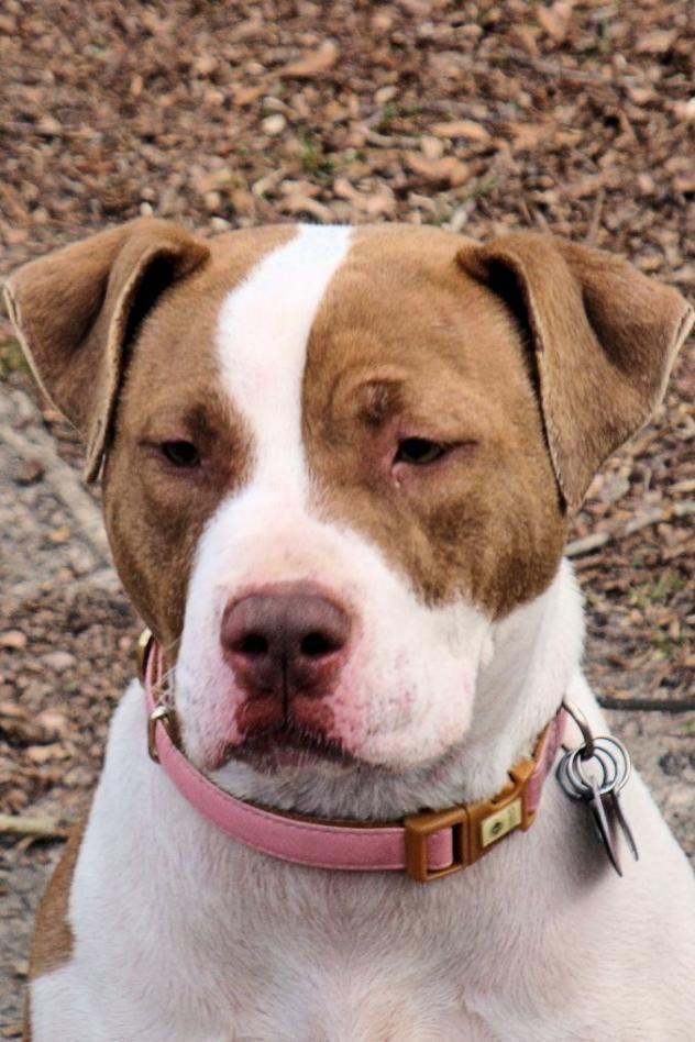 Adopt Flora on Dog adoption, Kitten adoption, American