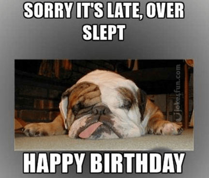 Pin By Miss Gaby On Funny Happy Birthday Memes Bulldog Funny English Bulldog Puppies Bulldog Puppies