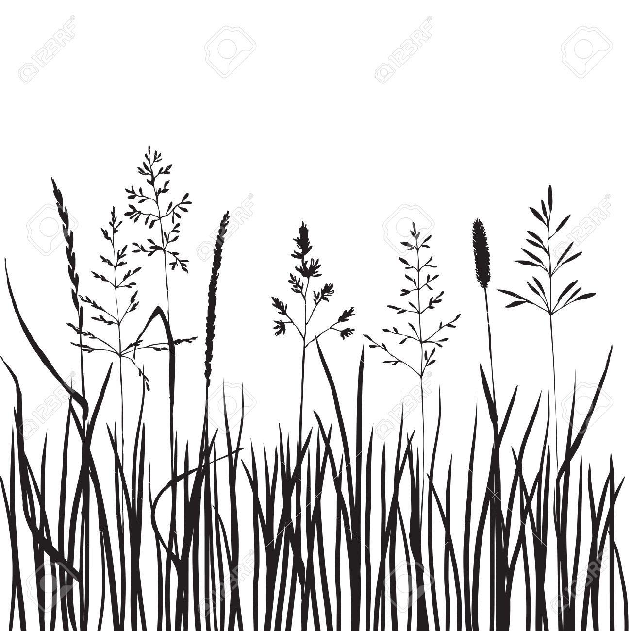 41957164 Black Grass Silhouettes Hand Drawn Wild Cereals