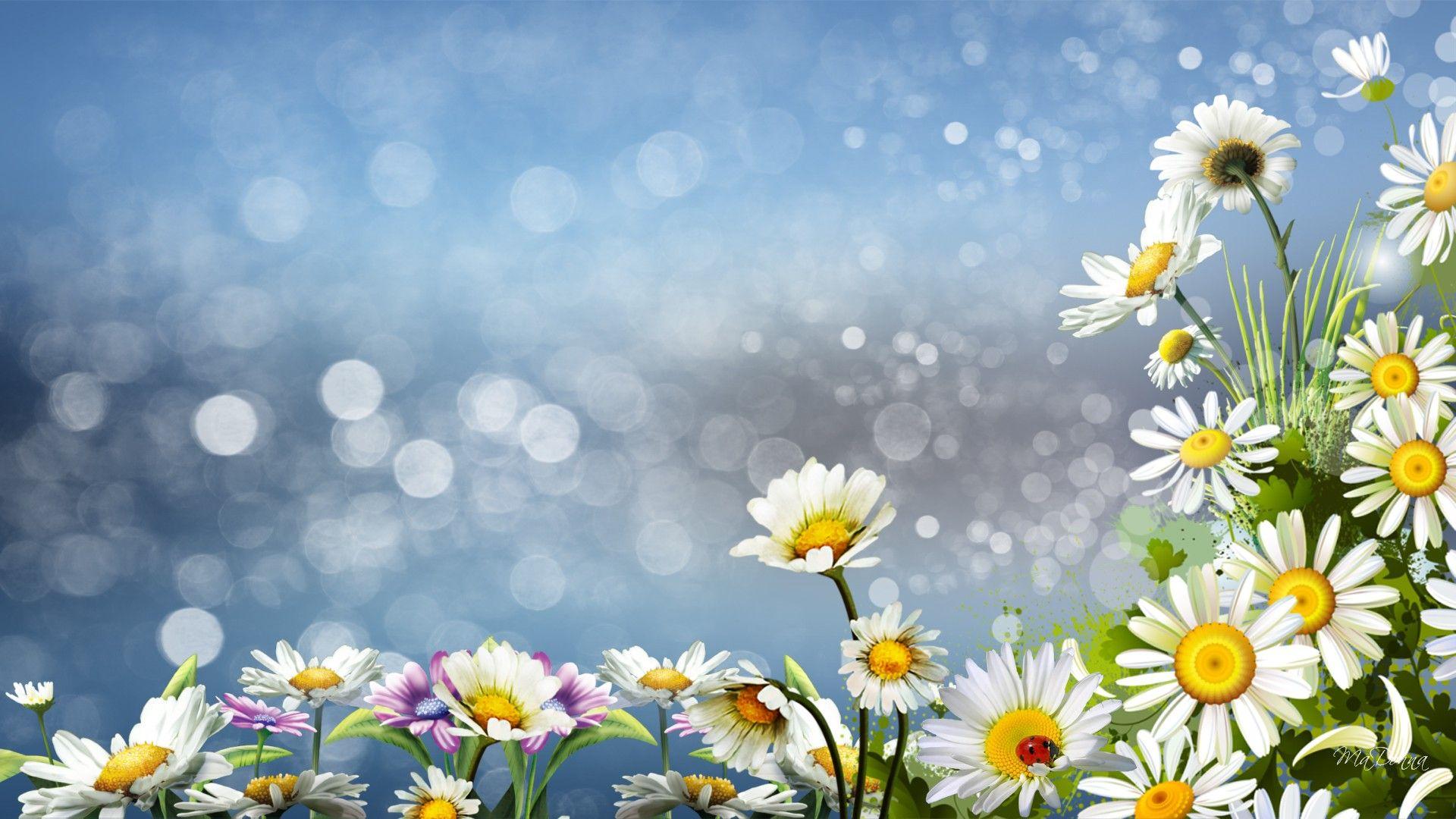 Oh, my, yes! Daisy wallpaper, Daisy background, Poppy