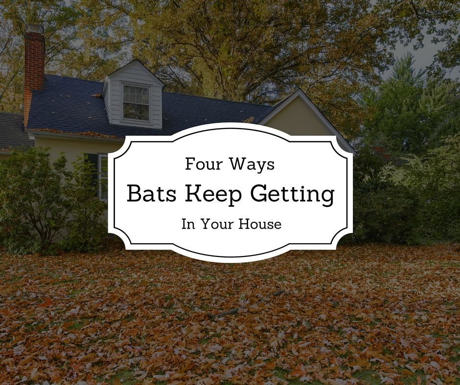 4 Ways Bats Keep Getting In Your House. Getting rid of