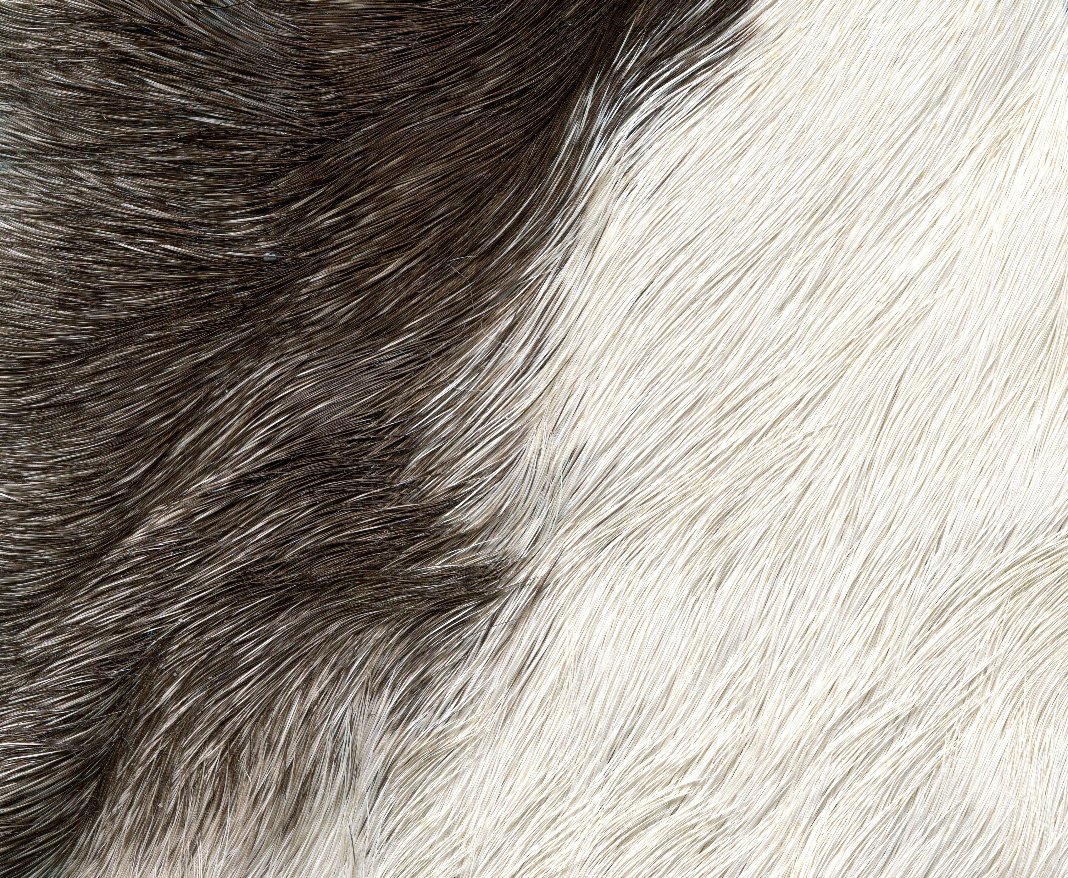 Fur Texture Texture drawing, Fur textures, Texture art