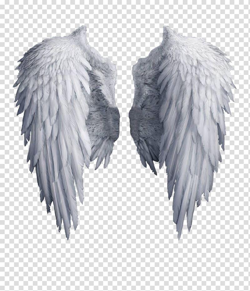 Archangel Wing Angel Wing White Angel Wings Transparent Background Png Clipart Angel Wings Art Dark Angel Wings Wings Artwork
