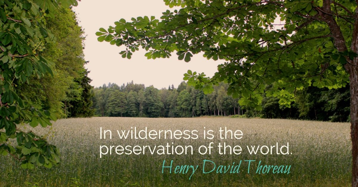 Today is 'World Environment Day'.  See and treasure all the beauty around you.  Spend time nurturing your little part of the world.    Image:  by Miriam, clearing in the woods @ Torpet in Kristinehamn, Sweden, my childhood home.  #simplelife #worldenvironmentday #wednesdaywisdom  #comingsoon  #possibilities  #childhoodhome
