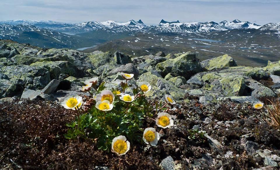 Uranostind, koldedalen, falketind. #Norway