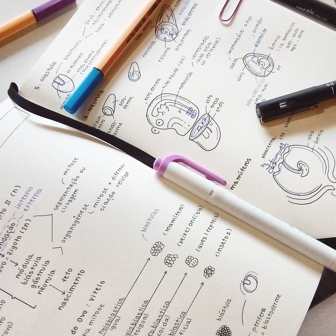 Studyidiom — Biology 📚