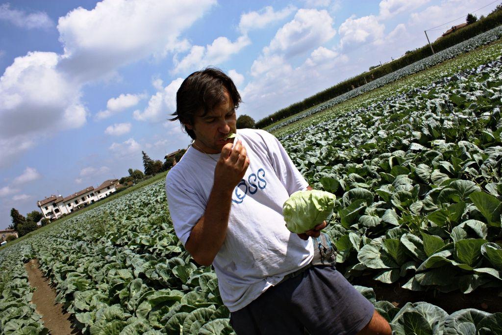 Mauro Zanarini... test qualità   #km0 #freschezza #sapore #territorio #modena www.lattugazanarini.com
