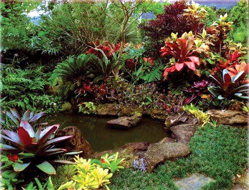 beautiful ornamental plants