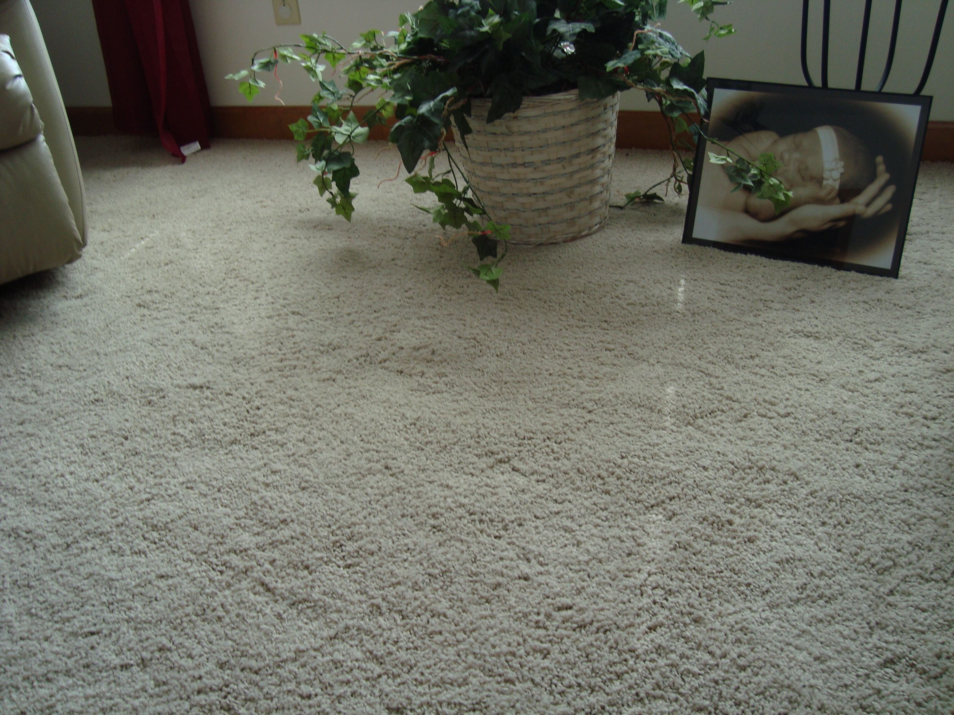 Custom Home Interiors Charlotte Mi: A Soft, Thick And Lush Mohawk Carpet That You Can Sink