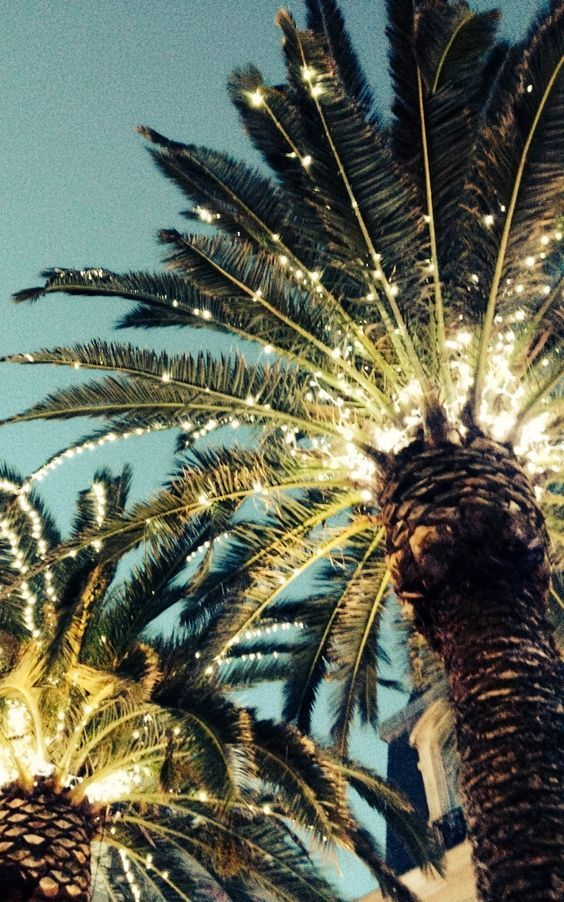 Fairy Light And Palm Trees