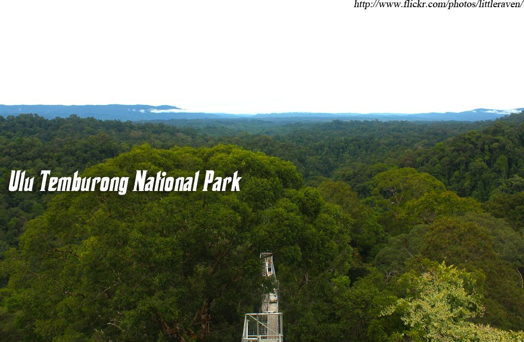 #Stand at the top of the #world in #Brunei.