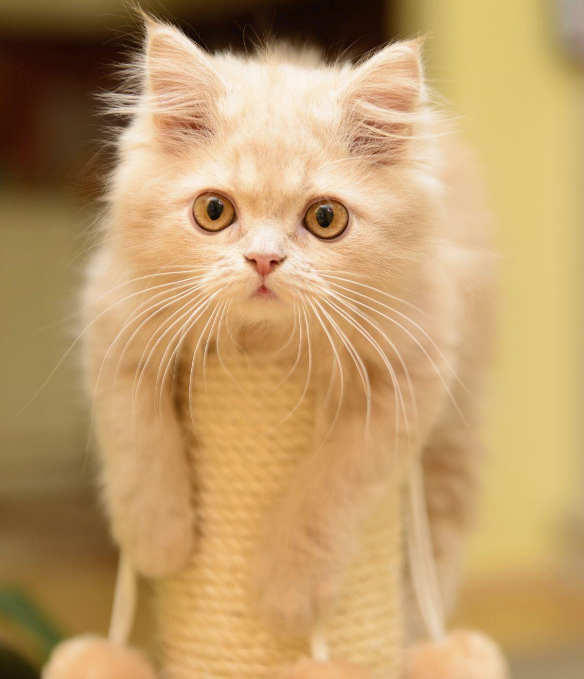 The Top Pet Hacks for Your Apartment | Rent.com Blog | Cat ...