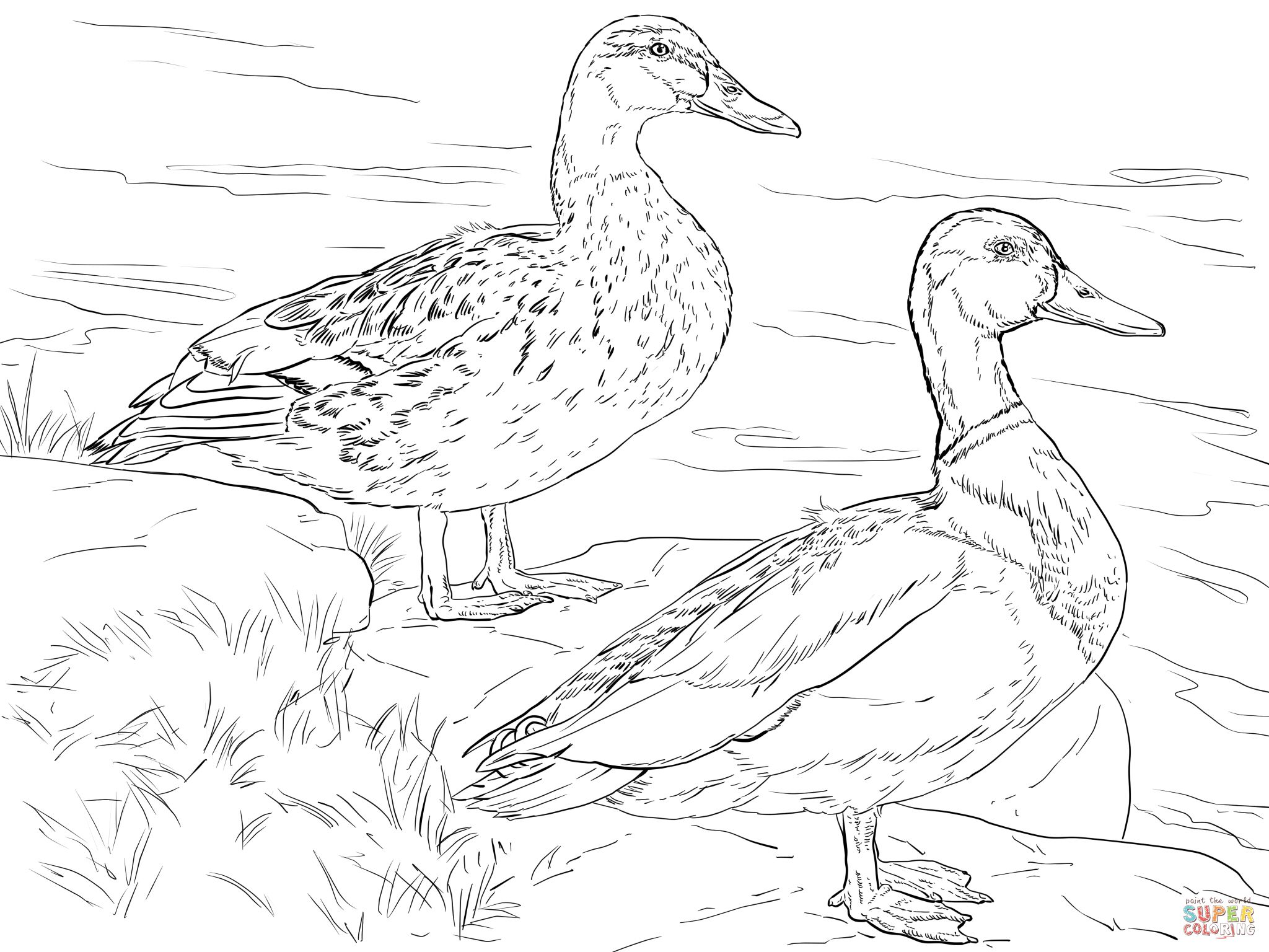 Male And Female Mallard Ducks Coloring Page Bird Coloring Pages Animal Coloring Pages Coloring Pages