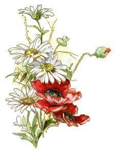 Free Vintage Image Daisies And Poppies Poppies Vintage Images Vintage Flowers