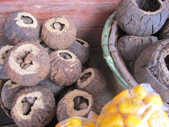 Castanhas-do-pará, ainda dentro do ouriço, como encontramos para vender na Feira do Ver-o-Peso, em Belém/Pará. Ao lado, amarelo, o taperebá.