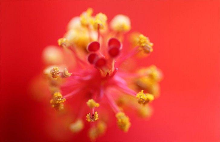 Macro-Photography-2