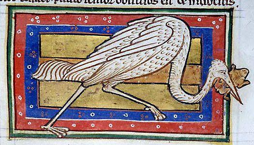 Medieval Bestiary : Stork Gallery