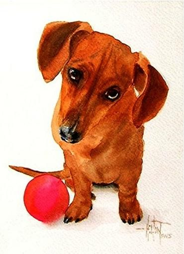Some Of Phil S Watercolors Dachshund Art Doxie Art Dog Artwork