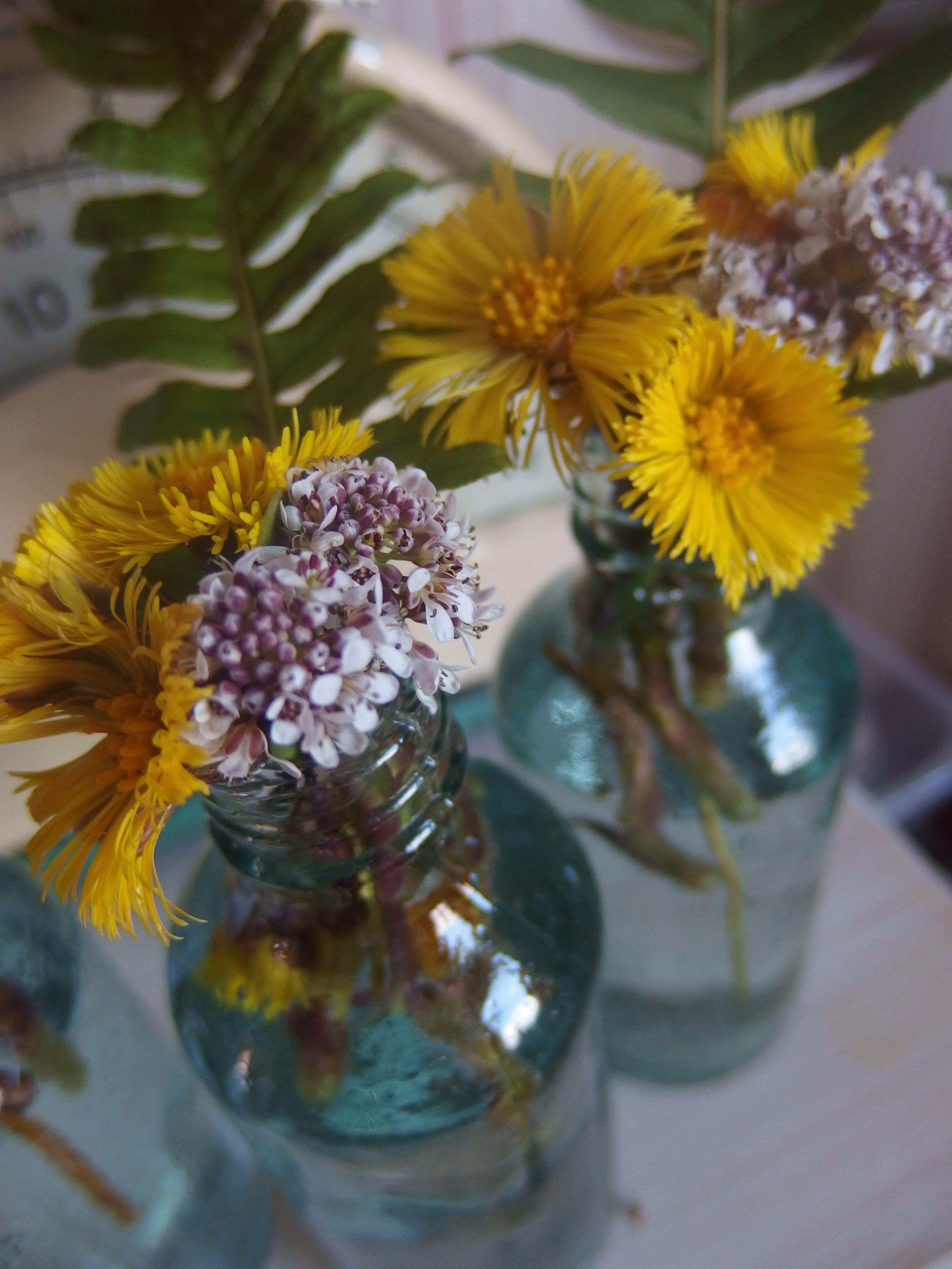 kevään ensimmäiset, taskuruoho ja leskenlehti