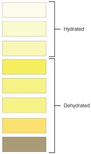 Urine Colors Chart Meaning Of Pee Color And Smell  Factors