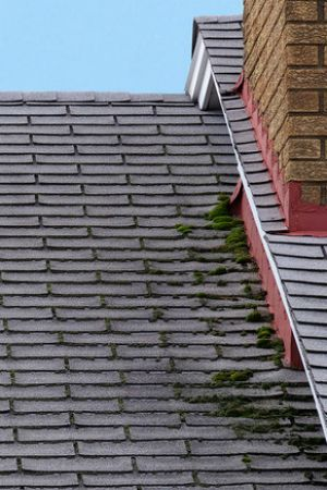 How To Remove Moss From Roof House Cleaning Tips