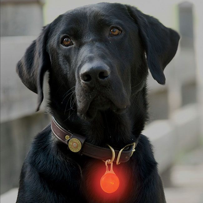 Just found this Pet Safety Lights - LED Collar Light -- Orvis on Orvis.com!