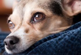 Pin On Pet Matters