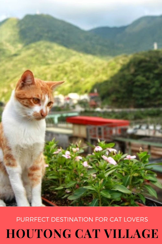 Taiwan's Cat Village A Popular Tourist Spot in 2020