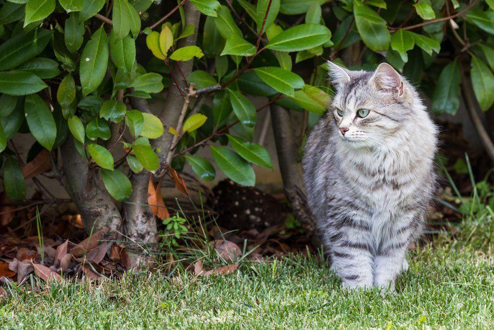 Katzen Aus Dem Garten Vertreiben 5 Effektive Tipps In 2020 Vertreiben Katzen Garten