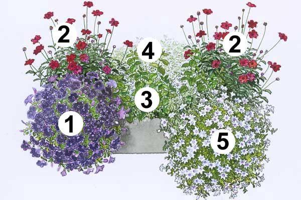 trendige blumenk sten zum nachpflanzen garten pinterest schokoladenblume petunien und. Black Bedroom Furniture Sets. Home Design Ideas