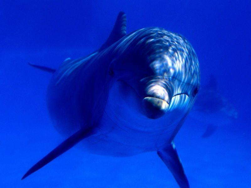 animals aquatics - Cerca amb Google