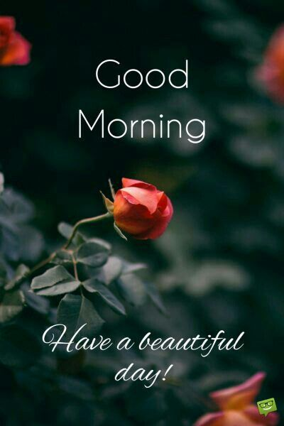 Good Morning Have A Beautiful Day Quotes Sayings Image