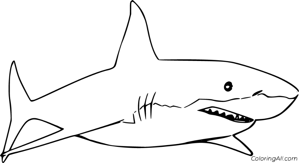 13 Free Printable Great White Shark Coloring Pages In Vector Format Easy To Print From Any Device And A Shark Coloring Pages Coloring Pages Fish Coloring Page