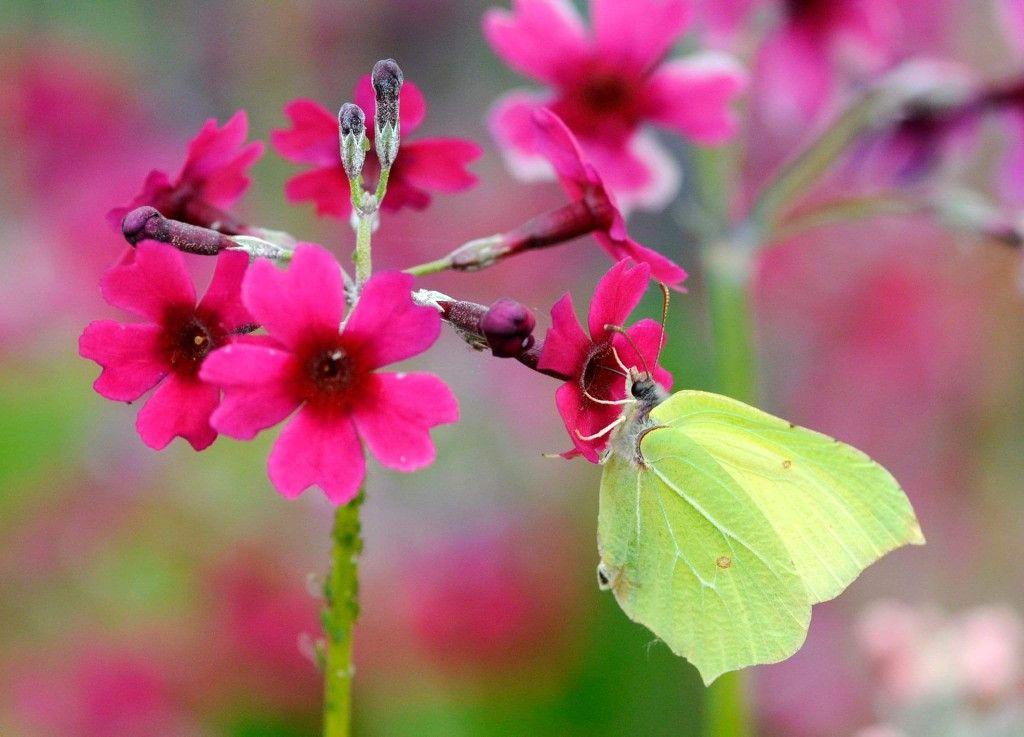 Pin De Christine Potocar Em Butterflies Moths