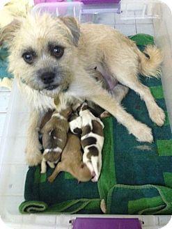 Mcdonough Ga Terrier Unknown Type Small Mix Meet Bumble A