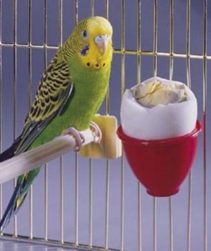 New Penn Plax Egg Treat Cup For Bird Bath Cage Bird Bird Accessories Treats