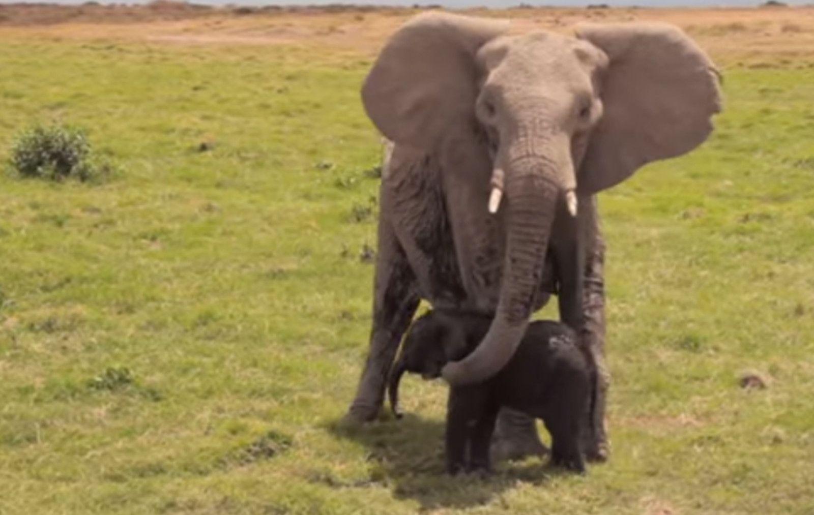 Elephant Superheroes Great Organizations Saving Elephants