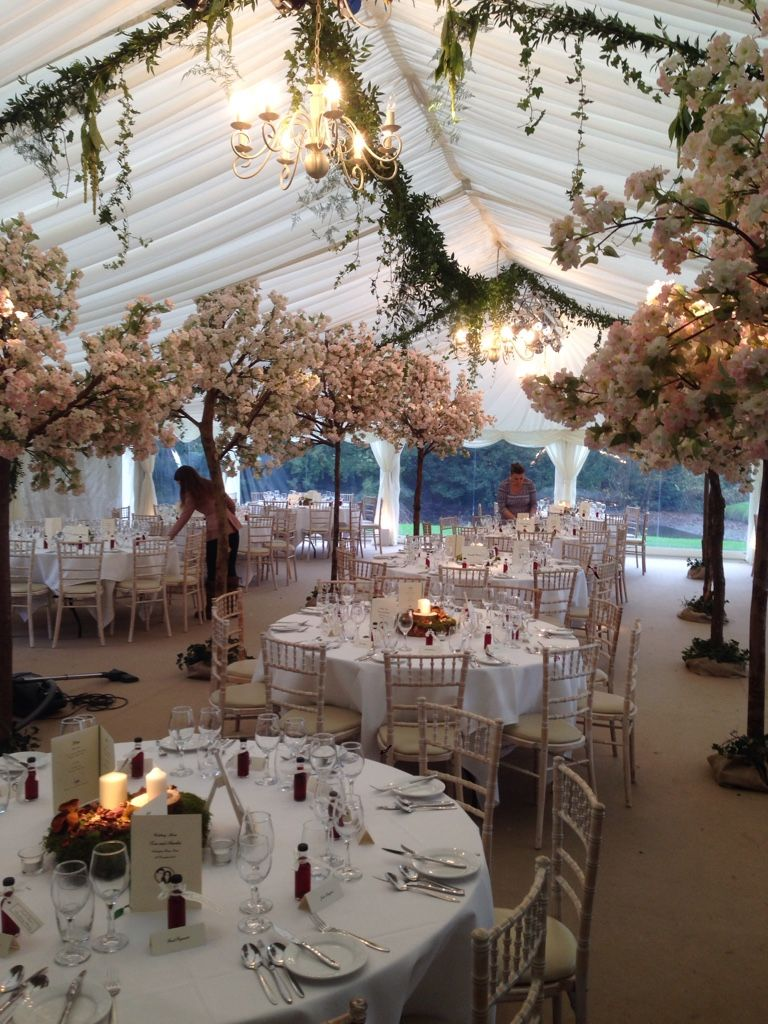 Our Cherry Blossom Trees At A Spring Wedding Www Crescent Moon Co Uk Blossom Tree Wedding Tree Wedding Centerpieces Tree Wedding