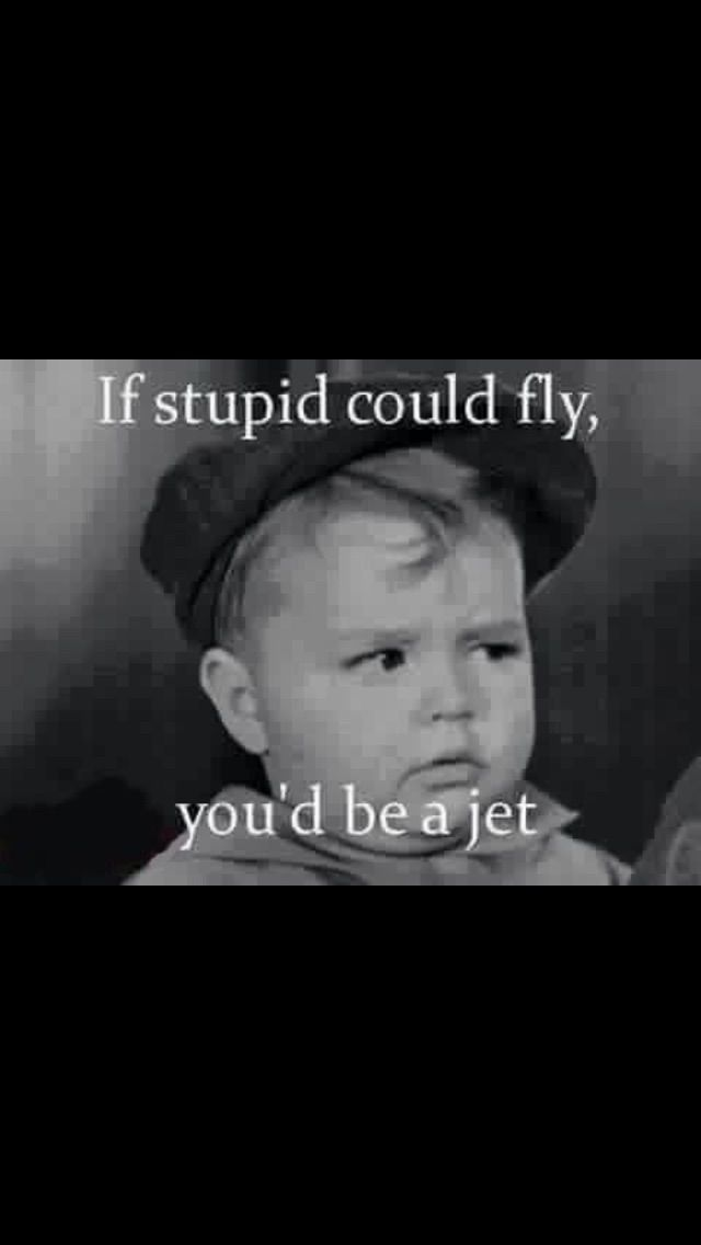 Dumbocrats Liberals Especially The Younger Ones Who Have No Ambition No Plans No Money And Are Fun Quotes Funny Best Funny Quotes Ever Funniest Quotes Ever