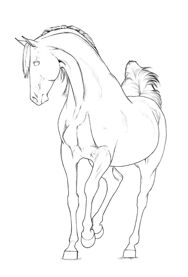 Arabian Stallion Lineart By Akuinnen24 On Deviantart Horse Coloring Pages Horse Coloring Horse Coloring Books [ 1085 x 737 Pixel ]