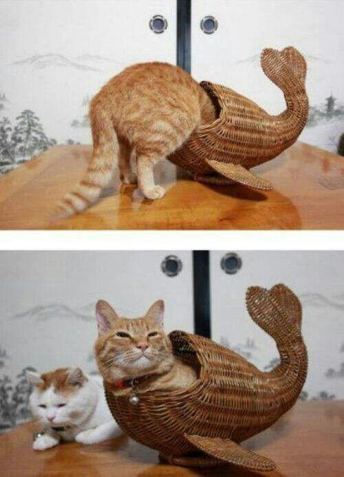 Look ma, i'm a catfish!