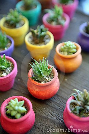 Miniature Cactus in colorful planters, Old Town, San Diego, California